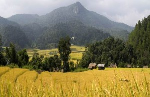 Het Doi Inthanon National Park ligt 60 km ten westen van Chiang Mai.