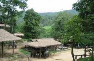 Het Maesa Elephant Camp ligt midden in de weelderige tropische jungle van de Maesa