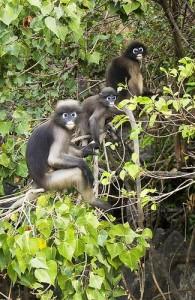 In het Khao Sam Roi Yot National Park leven vele kleine zoogdieren.