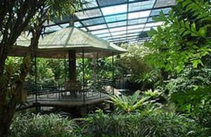 De vlinders van de Butterfly Garden vliegen vrij rond in hun eigen tropisch paradijs.
